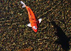 Free Fish Stock Image - 5286751