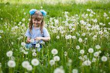 Free Amongst Dandelions Stock Photography - 5286812