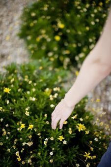 Free Woman Touching Plant Stock Photography - 5286882