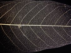 Free Leaf Nerves Stock Photography - 5288072