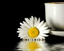 Free Camomile And Cup Of Coffee Royalty Free Stock Photo - 5288465