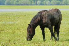 Free Wild Horse Royalty Free Stock Image - 5288726
