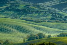 Free Italian Fields Royalty Free Stock Image - 5288896