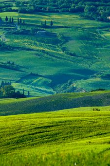 Free Italian Fields Royalty Free Stock Photo - 5288995