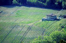 Free Italian Vineyard Royalty Free Stock Photo - 5289265