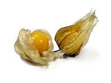 Free Physalis Fruits Royalty Free Stock Photos - 5289278