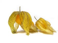 Free Physalis On White Stock Images - 5289294