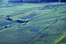 Free Italian Vineyard Royalty Free Stock Image - 5289296