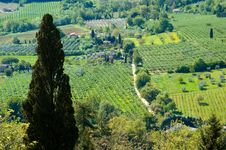 Free Italian Fields Stock Photography - 5289462