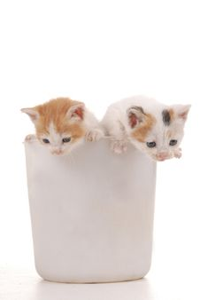 Free Two Kittens Spying Royalty Free Stock Photos - 5289548