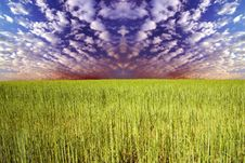 Free Grass And Sky Stock Photo - 5289970