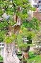 Free Bonsai In Nanjing GuLin Park Royalty Free Stock Images - 52844959