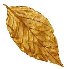 Yellow Golden Dry Leaf, Vintage Element Royalty Free Stock Photo