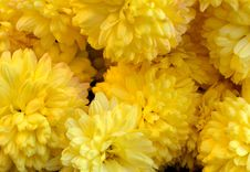 Free Yellow Chrysanthemums Abstract Royalty Free Stock Photography - 52869097
