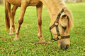 Free Horse Tied Up Royalty Free Stock Image - 5291716