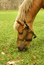 Free Horse Tied Up Royalty Free Stock Photos - 5291968