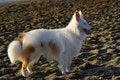 Free White Dog 2 Stock Photos - 5292123