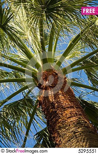 Free Palm Tree Stock Image - 5295551