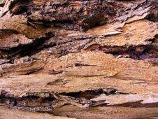 Free Wood Tree Stock Photos - 5290843