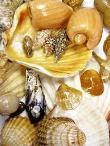 Free Many Seashells Stock Image - 5290981