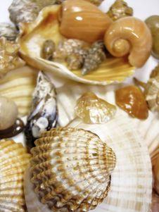 Free Several Types Of Sea Shells Stock Photos - 5290993
