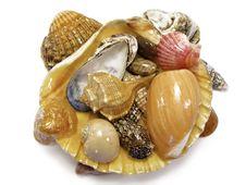 Free Several Types Of Sea Shells Stock Photo - 5291010