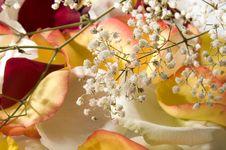 Petals. Stock Image