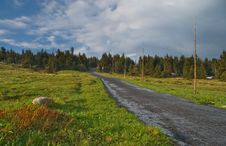 Free Spring Forest Landscape Stock Photography - 5291192