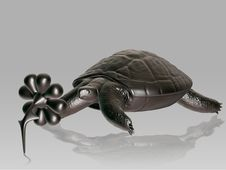 Free Turtle Royalty Free Stock Image - 5291636