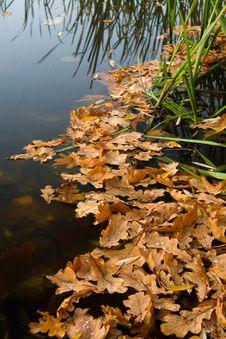 Free Lake Stock Photos - 5291653