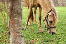 Free Horse Tied Up Stock Photography - 5291812