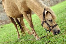 Free Horse Tied Up Stock Photography - 5291872
