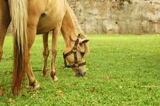 Free Horse Tied Up Stock Image - 5292001