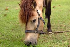 Free Horse Tied Up Royalty Free Stock Photo - 5292035