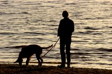 Dog Walking On The Beach Stock Photography