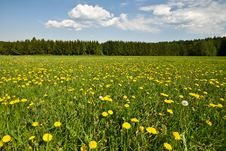 Free Summer Landscape With Dandelions. Royalty Free Stock Photos - 5292358