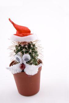 Free Cactus Royalty Free Stock Image - 5292386