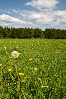 Free Green Summer Landscape Royalty Free Stock Photo - 5292405