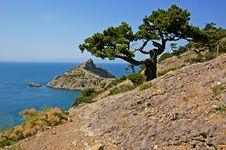 Free Bizarre Pine Tree Stock Image - 5293781