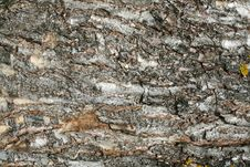 Free Old Tree Bark Texture Royalty Free Stock Photography - 5295147