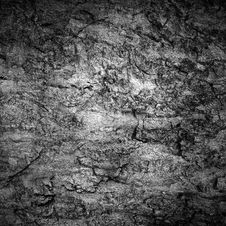 Free Grungy Bark Texture Stock Image - 5295361