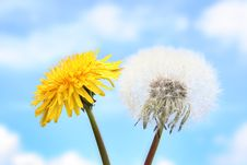 Free Two Dandelions Stock Images - 5295964