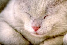 Free Cat Nap Royalty Free Stock Photography - 5296257