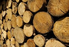 Free Stacked Logs Stock Photography - 5296282