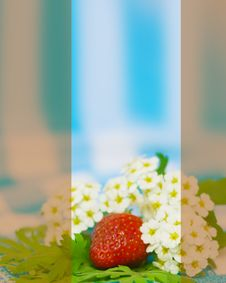 Free Strawberry And Flower On Fabric Background Stock Images - 5296514