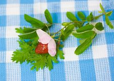Free Strawberry And Flower On Fabric Background Royalty Free Stock Image - 5296606