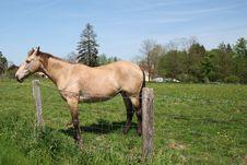 Free Beige Horse Stock Photo - 5298270