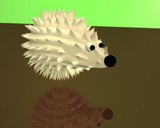 Free Hedgehog Stock Photography - 5299622