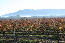 Free Vineyard In Autumn Stock Image - 5299691