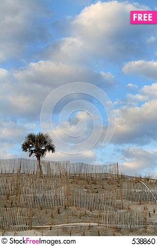 Free Palm Dune Stock Photo - 538860